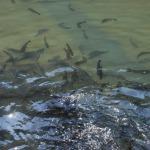Ribogojnica Temenica
